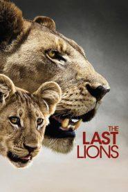 The Last Lions 2011