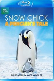 Snow Chick – A Penguin's Tale 2015