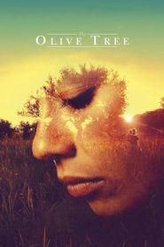 The Olive Tree 2016